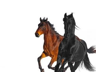 Lil Nas X – Old Town Road Remix ft. Billy Ray Cyrus